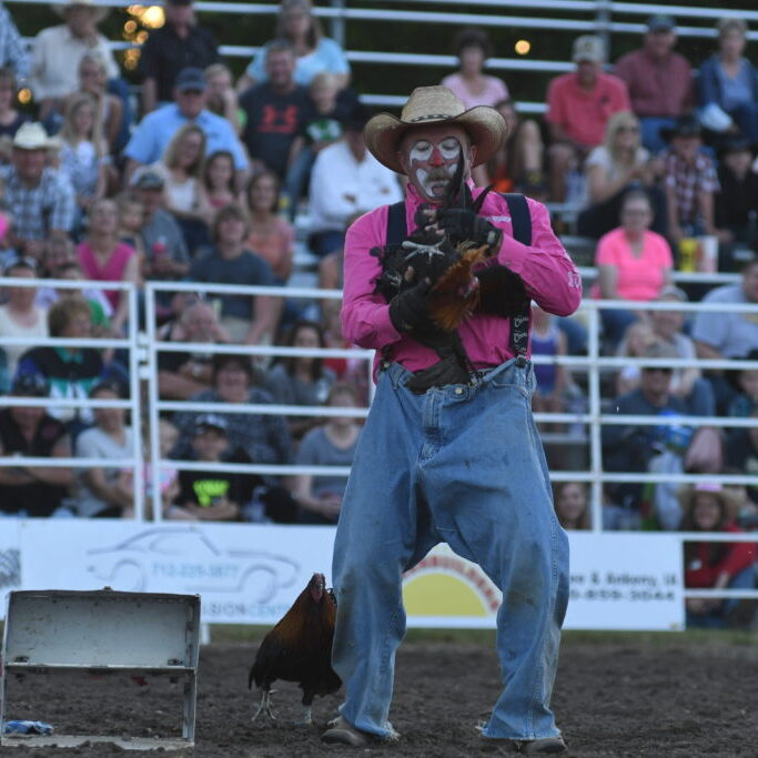Scott Cameron and his show chickens perform doing a rodeo_photo by Gretchen Kirchmann